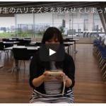 野生のハリネズミを死なせてしまった罪悪感(2016.7.18配信ビデオメルマガ)